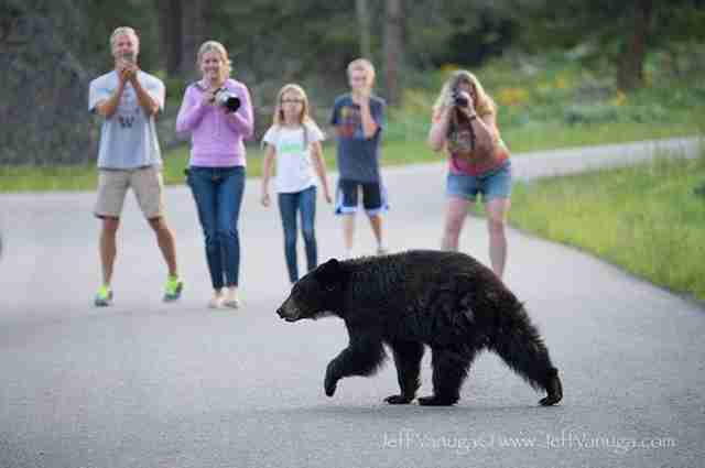 If You Love Animals, Don't Chase Them For A Photo. Here's Why.