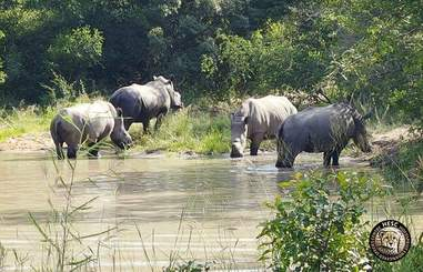 Rhinos on a game reserve in South Africa