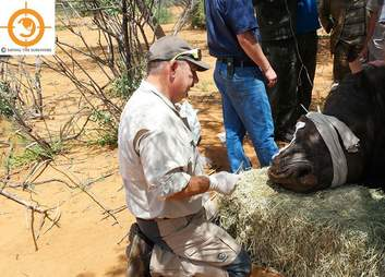 Rhino who survived a poaching attack in South Africa