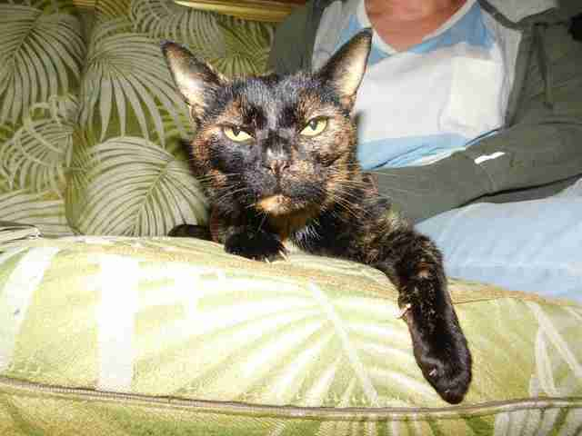 James, the cat lost in Hawaii for 15 years