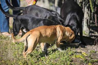 Homeless dogs in Redland, Florida, also known as The Redlands