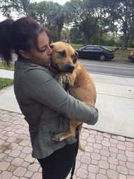 Harper being carried by Jennifer Adorno, president of Furever Bully Love Rescue