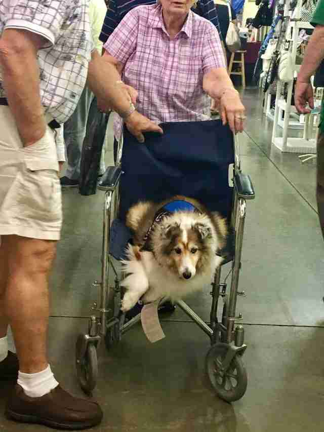woman and dog share wheelchair