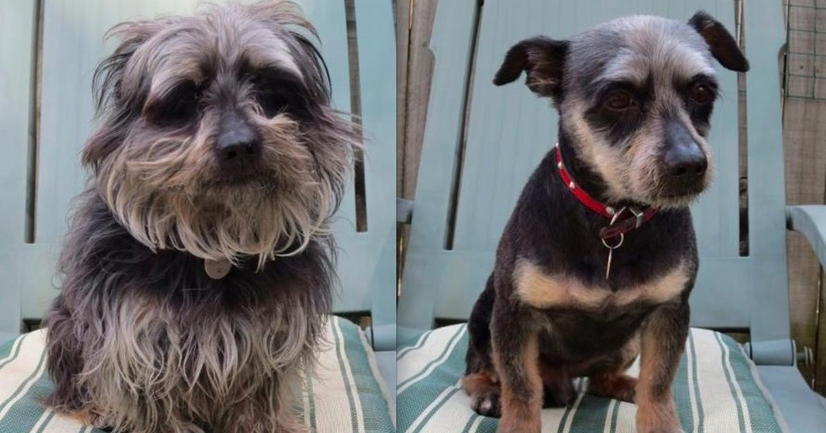 15 Dogs Before And After Their Spring Haircuts The Dodo
