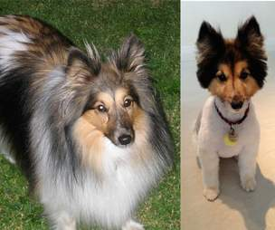 15 Dogs Before And After Their Spring