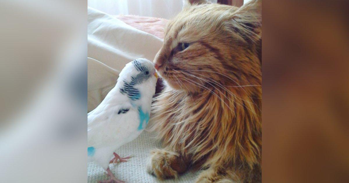 Cat And Bird Best Friends Site Youtube Com