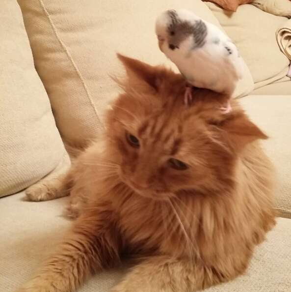 Cat and bird who are best friends