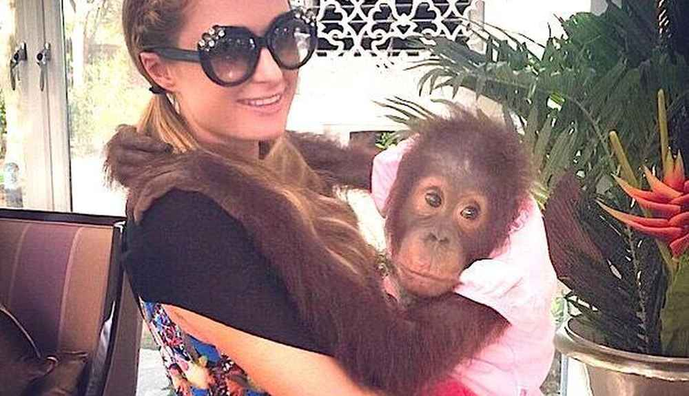 секе с орангутаном видео