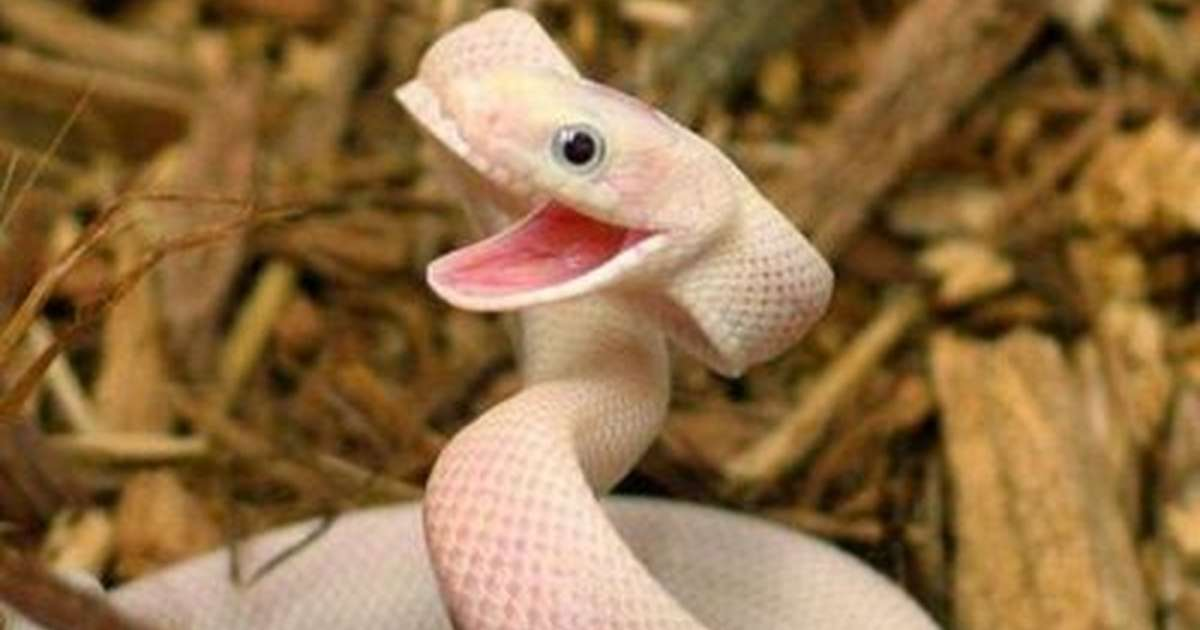 15 snakes who are too cute to even be real the dodo
