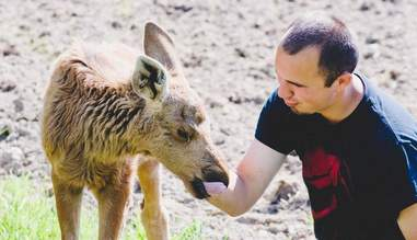 rescued moose loves his rescuer