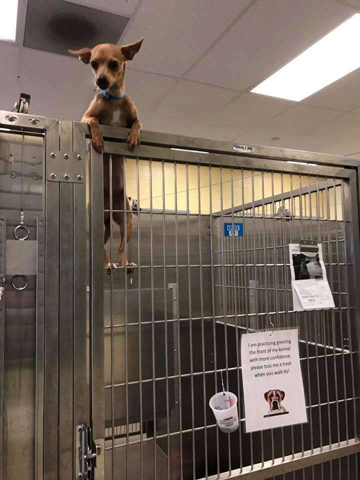 dog tries to escape her kennel