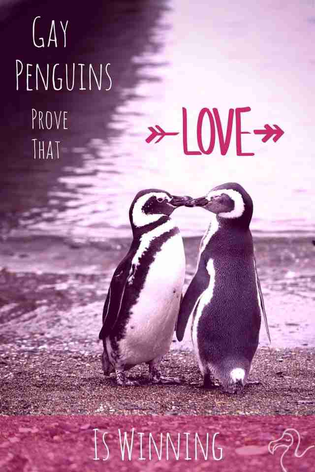 penguins are gay