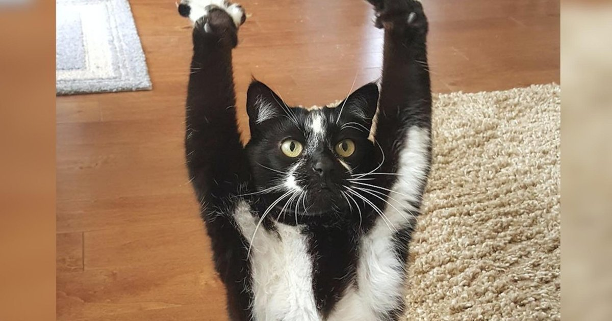 this cat keeps putting its paws in the air and nobody - HD1600×1000