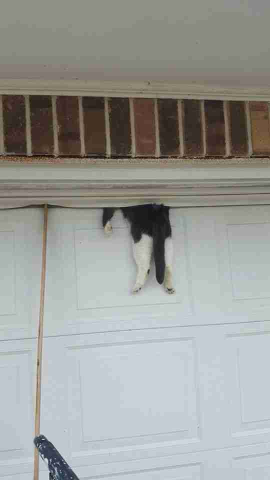 Cat Finds Out Why You Shouldn T Sleep On The Garage Door