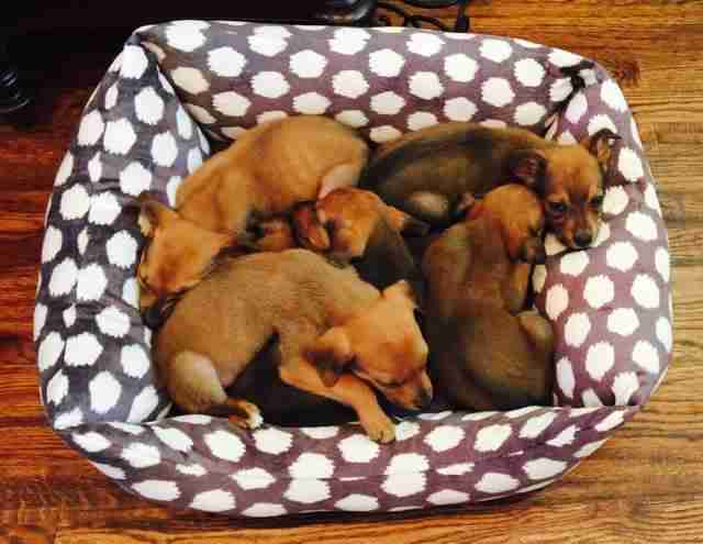 puppies dumped in box with sign saying 'shoot me'