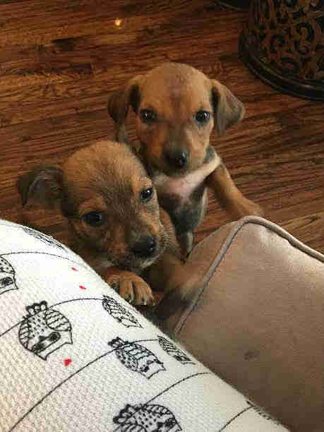puppies dumped in woods doing much better now