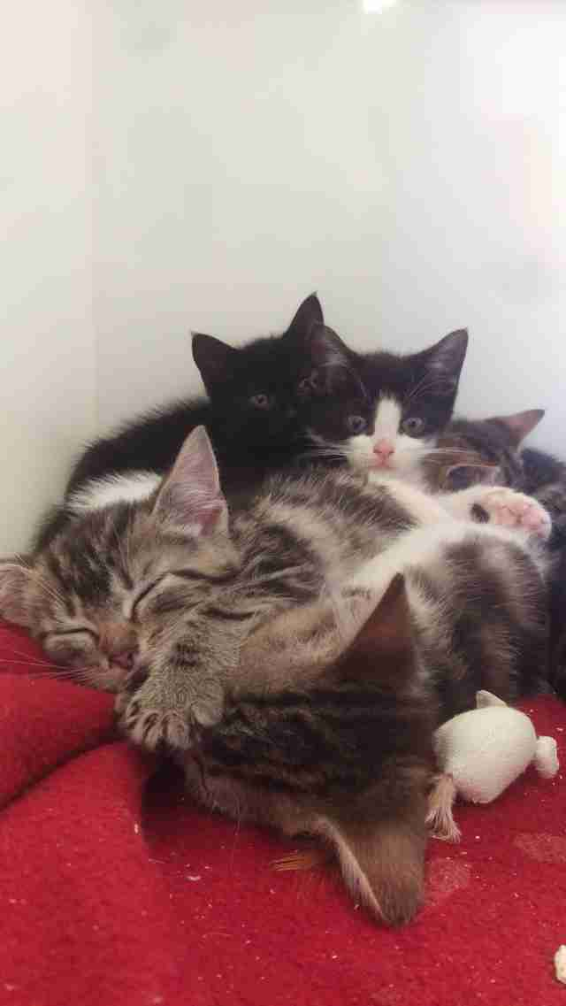 cat and 8 kittens found in suitcase