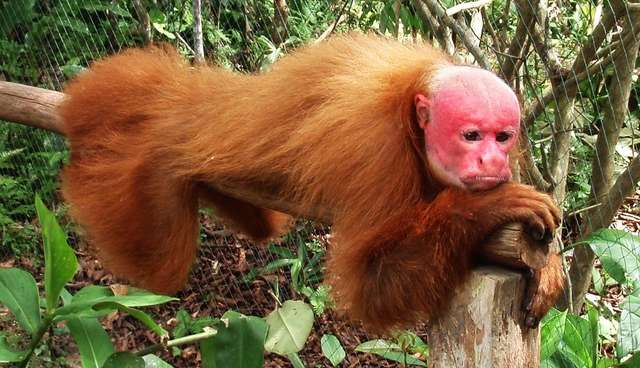 Strange-Looking Animals You Had No Idea Existed
