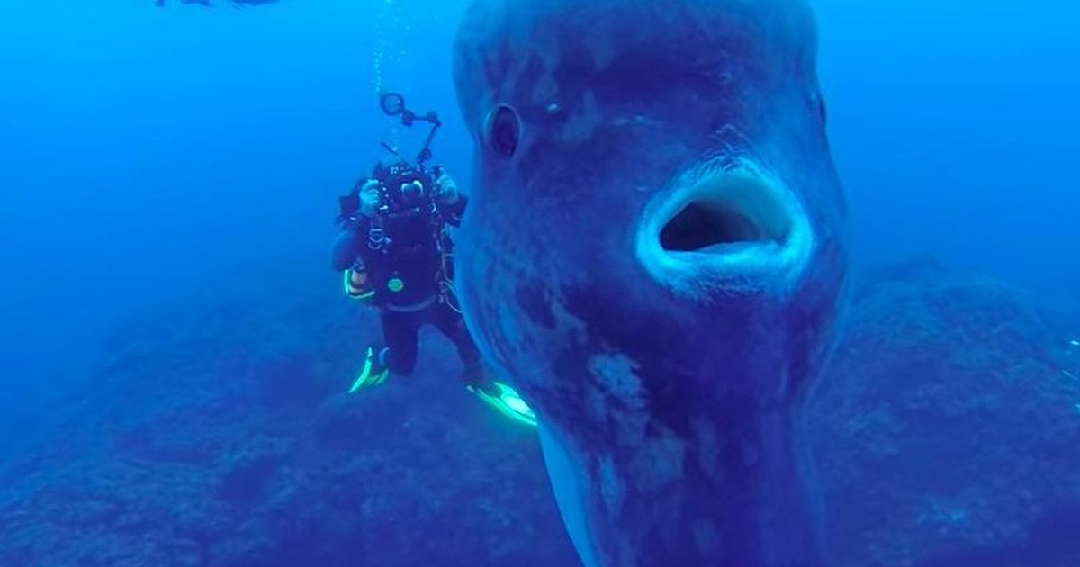 Divers stumble upon the biggest fish they 39 ve ever seen for Fish world on facebook
