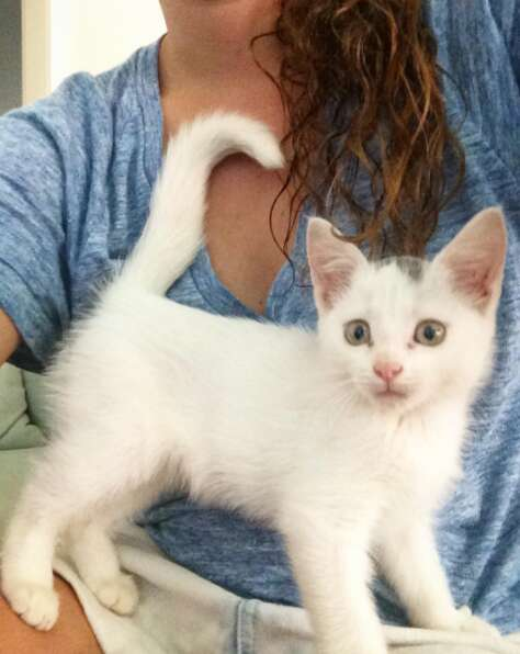 Tuukka, a stray kitten who was found in a tree