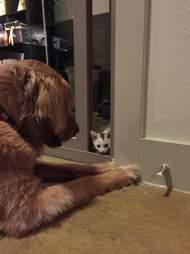 Kitten looking at dog through the crack in the door