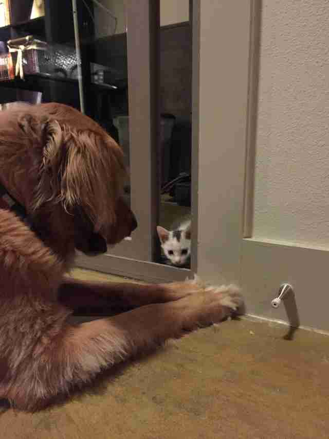 Kitten looking at dog through the crack in the door
