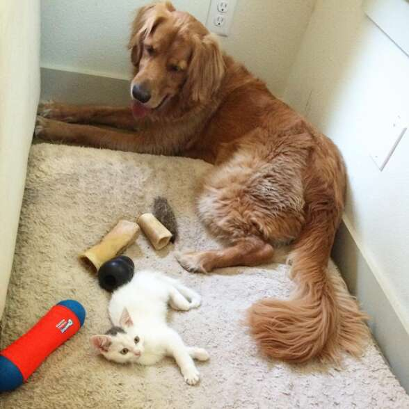 Dog and cat siblings who love each other