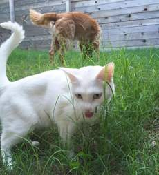 Dog and cat siblings both eating grass