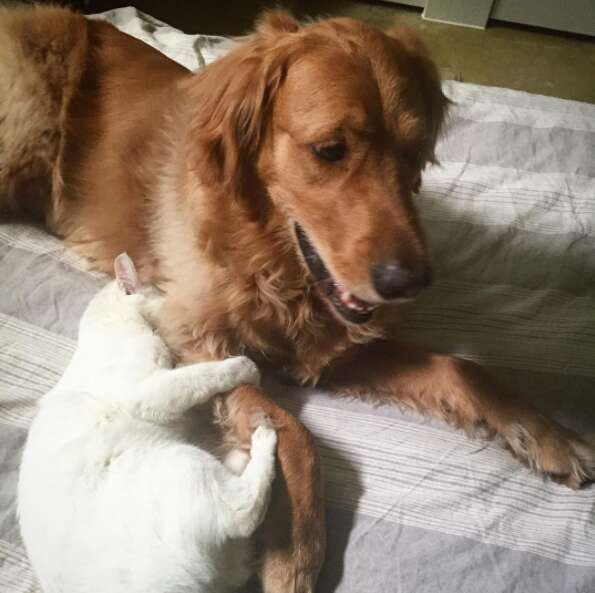 Brady and Tuukka - a dog and cat who love each other
