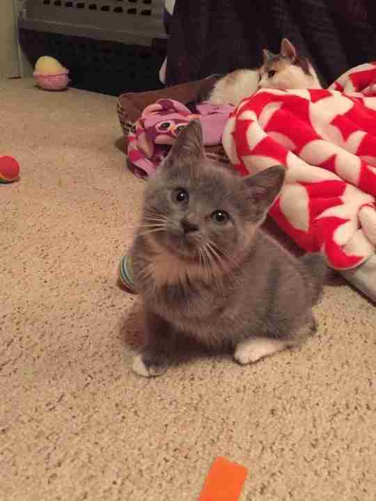 olive special needs kitten