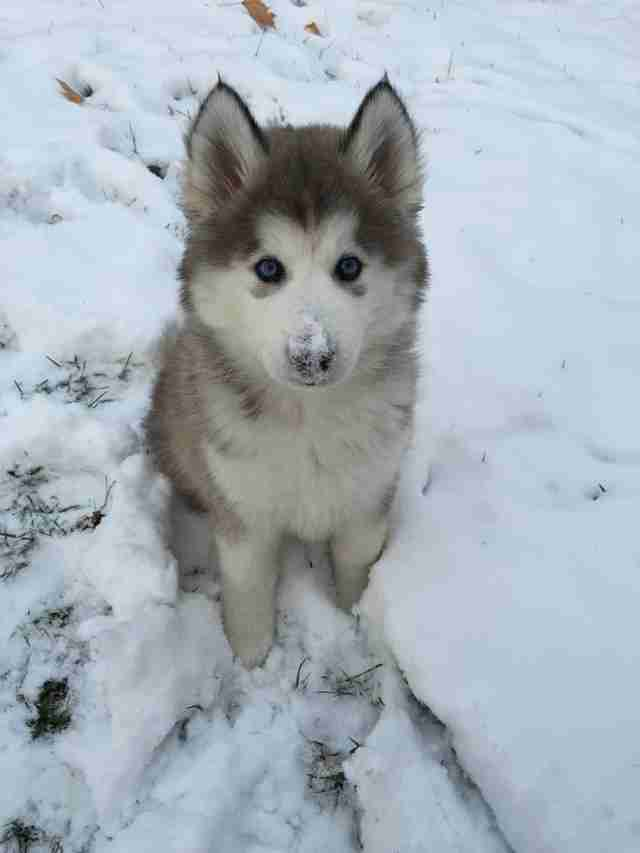 puppies in snow