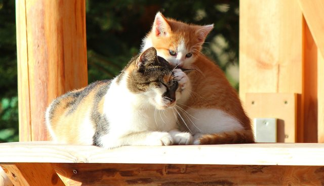 Uniquely Wonderful Reasons To Love All Cats
