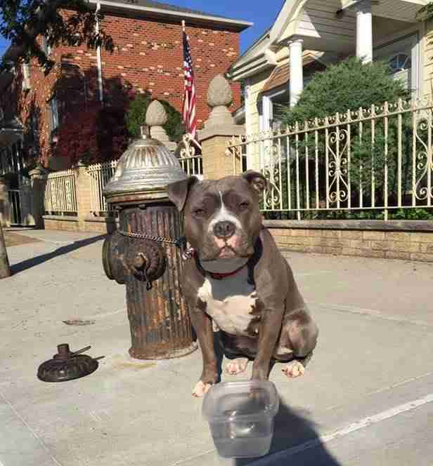 dog tied to fire hydrant in Queens New York
