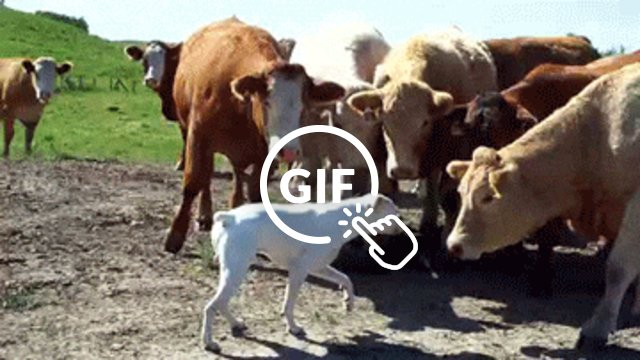 17 Animals Who Know That Cows Make The Best Friends - The Dodo