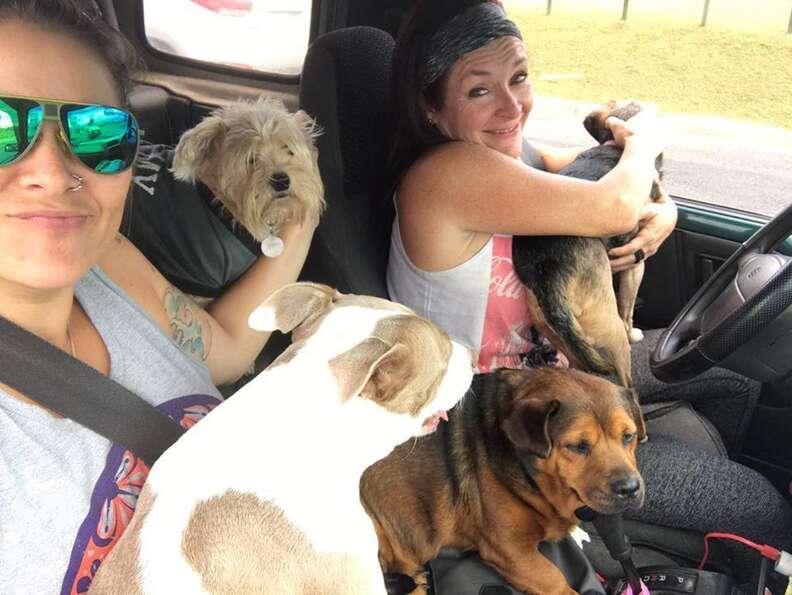 Lya Battle, cofounder of Territorio de Zaguates, a dog sanctuary in Costa Rica, with her rescue dogs