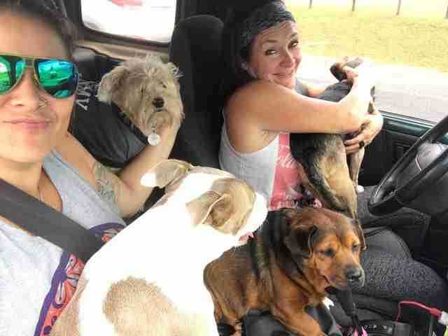 Lya Battle, cofounder of Territorio de Zaguates, a dog sanctuary in Costa Rica, with her rescue dogs
