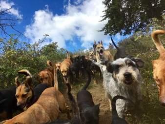 Rescue dogs at Territorio de Zaguates, a dog sanctuary in Costa Rica