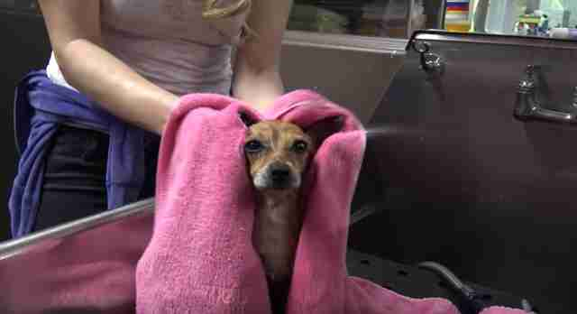 Homeless three-legged dog rescued