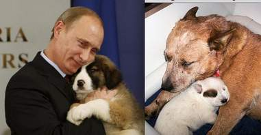 9 Animals Who Are Not Actually Vladimir Putin The Dodo