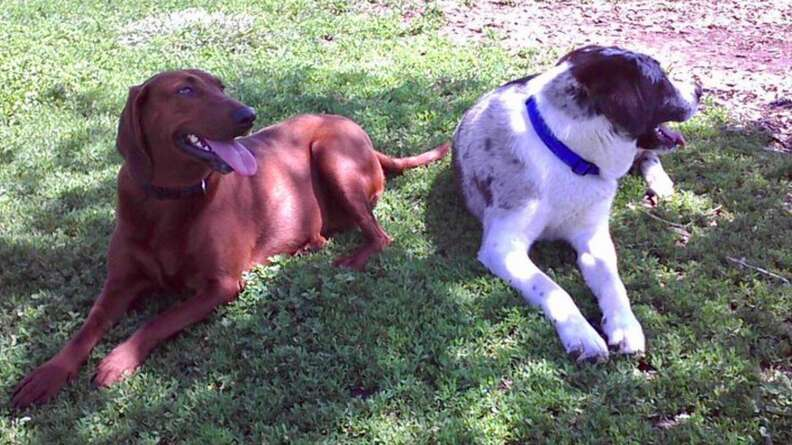dog best friends adopted together