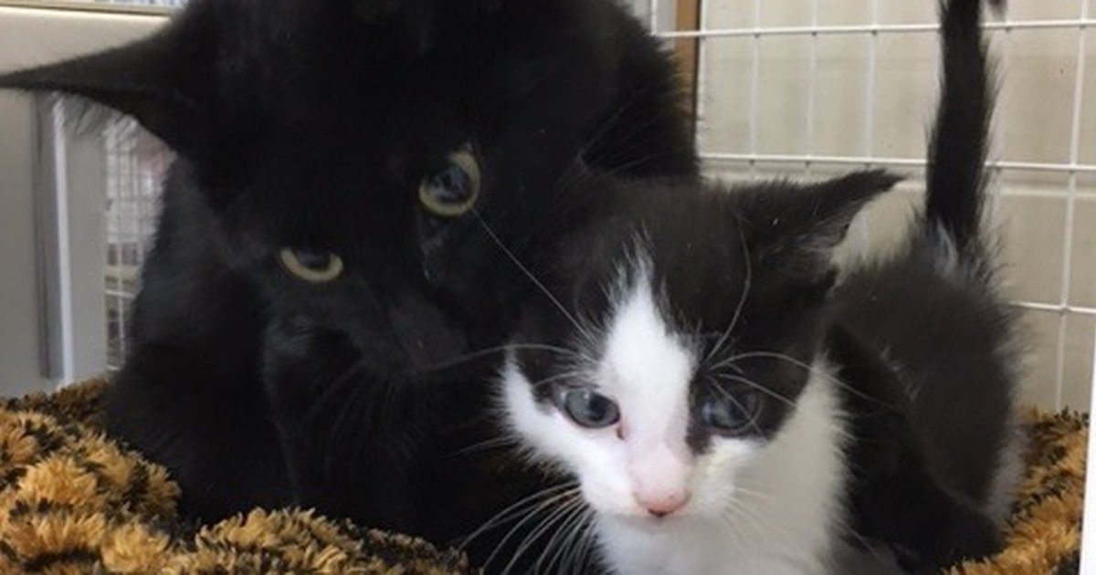 Who Knew That Cats Are Their Protectors >> Mom Cat Found Taking Care Of Abandoned Kittens Isn T Actually A Mom