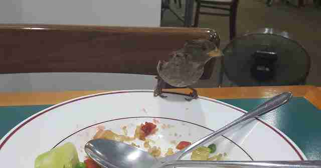 sparrow has lunch with man every day