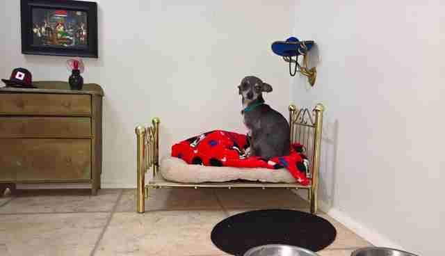 dog bedroom. Share on Facebook  Dog s Owner Builds Him A Room Under The Stairs Dodo