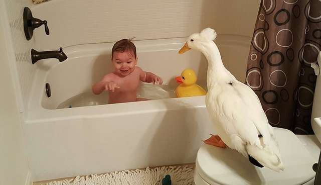 Little Boy Takes A Bath With His Pet Duck - The Dodo
