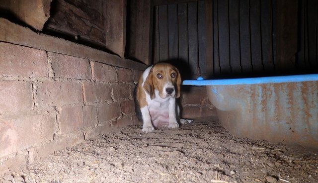 Puppy Mill Mother So Scared She Hides Her Babies In The Wall