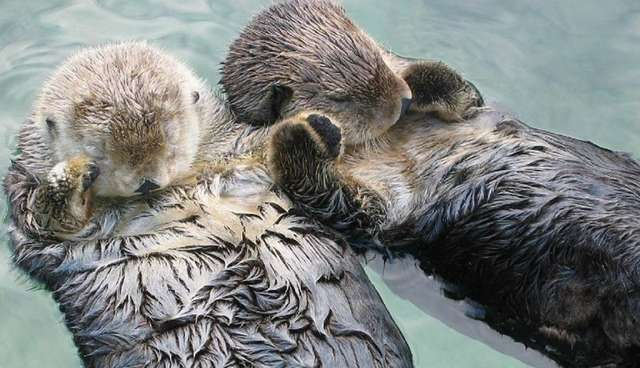 5 reasons you should never believe that otters are anything but