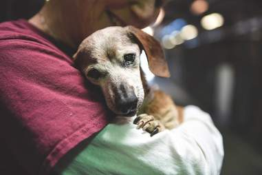 Woman hugging old shelter dog