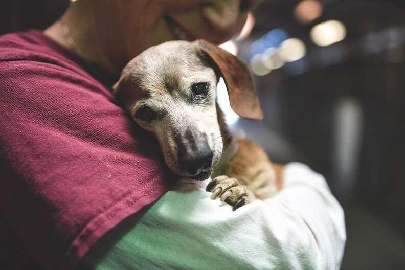 Woman hugging old shelter dog