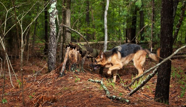 What The Dog Knows: A Day In The Life Of A Corpse-Sniffing