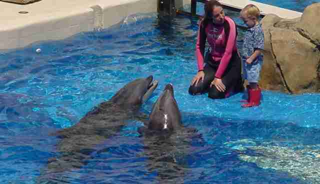 Incidents At Seaworld Parks: 7 Reasons You And Everyone You Know Should Boycott